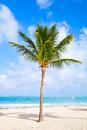 Coconut Palm Tree Growing On A Sandy Beach Stock Images - 49541334
