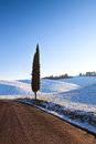 Lonely Cypress Tree And Snow In Winter.Rural Landscape. Tuscany, Royalty Free Stock Image - 49565826