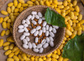 Silkworm Cocoons Animal For Industrial Stock Photos - 49568853