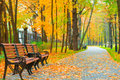 Fallen Maple Leaves On The Path Of The Park Royalty Free Stock Image - 49580076