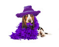 Funny Puppy In Purple Feather Boa Stock Image - 49588551
