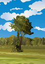 A Lonely Tree On The Meadow- Cornfield Stock Photos - 4963113