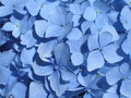 Blue Hydrangea Stock Photos - 4964423
