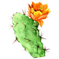 Opuntia Cactus With Yellow Flower, Watercolor Royalty Free Stock Photos - 49601158