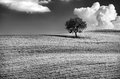 Lonely Tree Stock Photography - 49610352