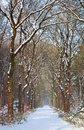 Path In White Snow Winter Forest Stock Images - 49647704