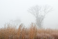 Frosted Autumn Tall Grass Prairie Stock Images - 49657214