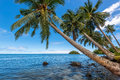 Coconut Palm Trees Stock Photo - 49680550