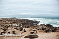 Sea Lions To Cape Cross, Namibia, Africa Stock Photos - 49689343