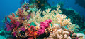 Colorful Underwater Reef With Coral And Sponges Royalty Free Stock Photography - 49691497