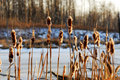 Winter Reeds In Sunset Stock Images - 4976754