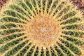 Golden Barrel Cactus Plant Close Up Stock Photos - 49728673