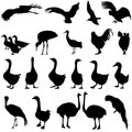 Set  Silhouettes  Birds In The Zoo Collection On A Royalty Free Stock Photo - 49748345