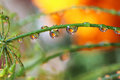 Water Drop Reflection Flowers Nature Royalty Free Stock Photography - 49831627