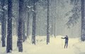 Cross Country Skiing Through The Woods. Royalty Free Stock Photos - 49843918