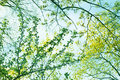 Spring Trees Royalty Free Stock Photography - 49846797