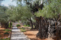 The Path In The Garden Of Gethsemane Royalty Free Stock Photos - 49858148