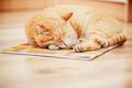 Peaceful Orange Red Tabby Cat Male Kitten Sleeping Stock Images - 49877604