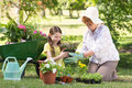 Happy Grandmother With Her Granddaughter Gardening Royalty Free Stock Images - 49891579