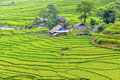 Rice Field Terraces Royalty Free Stock Images - 49916099