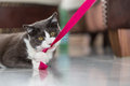 Playing Cat Stock Images - 49949124