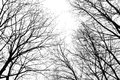 Abstract Leafless Tree Branches Stock Photo - 49966460