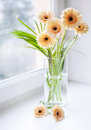 Gerberas Bouquet On The Windowsill With Bright Daylight Stock Images - 49992134