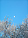 The Moon In The Clean Blue Sky Stock Photos - 506033