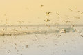 Seagulls Flying Above Water Royalty Free Stock Image - 50005306