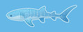 Funny Whale Shark Stock Photography - 50035052