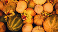 Assorted Autumn Pumpkins, Squash And Gourds Royalty Free Stock Photo - 50078215