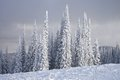Snow Covered Schweitzer Royalty Free Stock Photo - 50113795