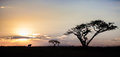 African Sunset With Wildebeest, South Africa Royalty Free Stock Photo - 50136855
