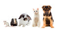 Set Pets Royalty Free Stock Image - 50144616