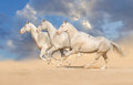 Group Of Horse Run Stock Images - 50152794