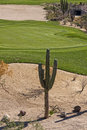 Desert Golf Course Green Stock Images - 50177564