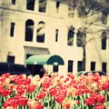 New York City Spring Stock Photography - 50185862