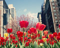 New York City Spring Stock Photography - 50186502