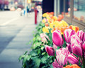 New York City Spring Royalty Free Stock Photo - 50186775