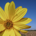 Yellow Summer Stock Images - 5024794