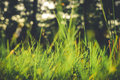 Grass Closeup In The Evening Vintage Style Stock Photo - 50208570