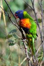 Colorful Parrot Stock Photos - 50217013