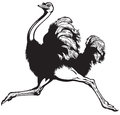 Running Ostrich Royalty Free Stock Image - 50238846