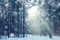 Magical Winter Forest, A Fairy Tale, Royalty Free Stock Images - 50267149