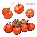 Watercolor Colored Pencils Tomatoes Sketches Set With Ink Outline Stock Photography - 50271702