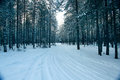 Magical Winter Forest, A Fairy Tale, Royalty Free Stock Photography - 50290777