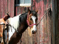 Saddled Horse Tied To A Barn Stock Photography - 5039632