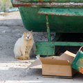 Dirty Homeless Cat Near Garbage Cans Stock Photo - 50325480