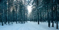 Magical Winter Forest, A Fairy Tale, Royalty Free Stock Photos - 50327048