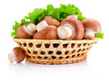 Fresh Field Mushroom In Basket And Leaves Of Green Salad Isolated Royalty Free Stock Photo - 50331395